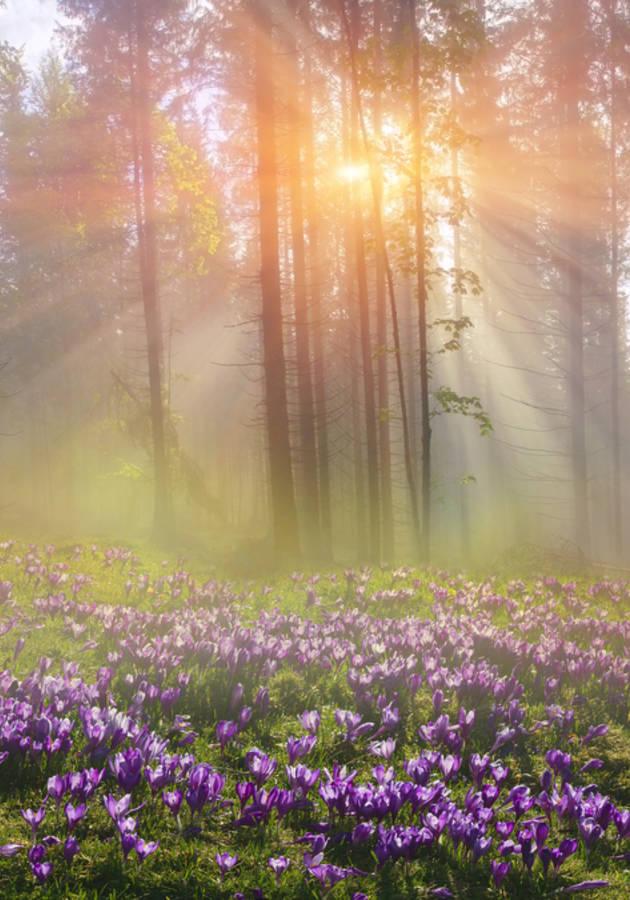 Livro O Milagre Da Manhã por Hal Elrod - 12minutos